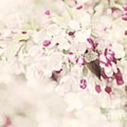 Dreaming Of Spingtime Blossom Art Print