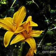 Dreams Of A Day Lily Art Print