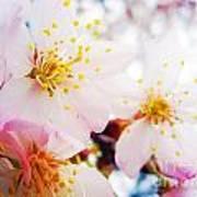 Dreamy Blossom Art Print