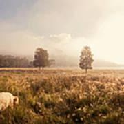 Dreamy Fields. The Trossachs. Scotland Art Print