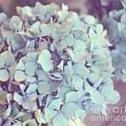 Dreamy Image Of Hydrangea Flower Art Print