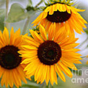 Dreamy Sunflower Day Art Print