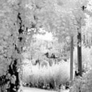 Dreamy Surreal Black White Infrared Arbor Art Print