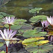Dreamy  Water Lillies Art Print