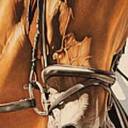 Dressage And Details Art Print
