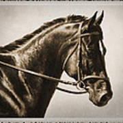 Dressage Horse Old Photo Fx Print by Crista Forest