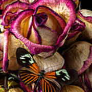 Dried Rose And Butterfly Art Print