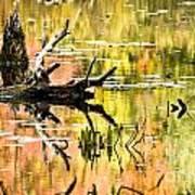 Drift Wood Reflections Art Print