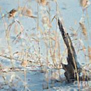 Driftwood Abstract Art Print
