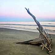 Driftwood At Dusk Art Print