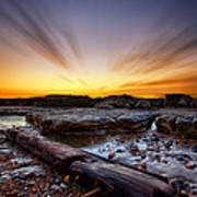 Driftwood Art Print by Mark Leader