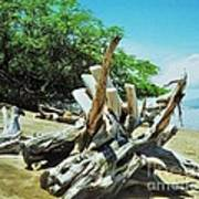 Driftwood On A Maui Beach Art Print