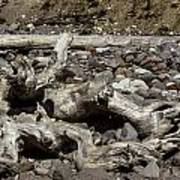 Driftwood Mt. Rainier  Art Print