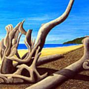 Driftwood - Nature's Artwork Art Print