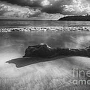 Driftwood On A  Beach Print by George Oze