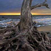 Driftwood On Jekyll Island Art Print by Debra and Dave Vanderlaan