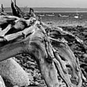 Driftwood On Rocky Beach Art Print