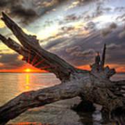 Driftwood Sunset Art Print
