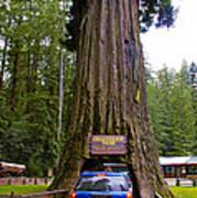 Drive Through Redwood Tree Art Print