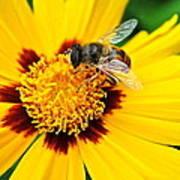 Drone Bee Art Print