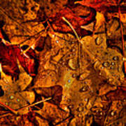 Droplets Of Autumn Art Print