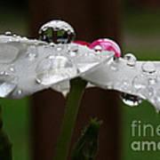 Drops Of Life Art Print