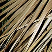 Dry Palm Leaves Art Print