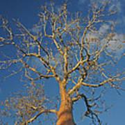 dry season in Madagascar Art Print
