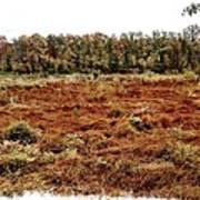 Dry Swamp Art Print