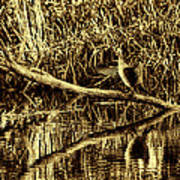 drying cormorant BW- Black bird sitting on log over water Art Print