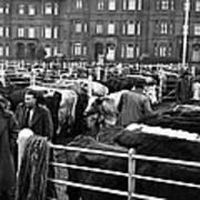 Dublin Cattle Market 1959 Art Print
