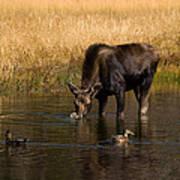 Duck Duck Moose Art Print