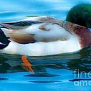 Duck Glide Art Print