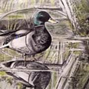 Duck Of Pond Art Print