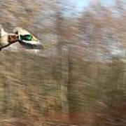 Duck On The Run Art Print