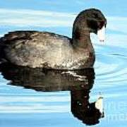 Duck Reflection Art Print