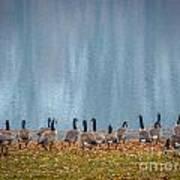 Duck Reflections Art Print