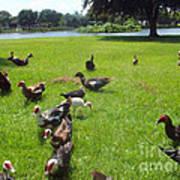 Duck Season Art Print