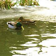 Duck Swimming In A Frozen Lake Art Print