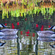 Duckland Pond Reflections Art Print