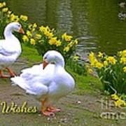 Ducks And Daffodils Greeting Art Print