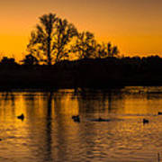 Ducks At Sunrise On Golden Lake Nature Fine Photography Print  Art Print