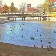 Ducks At The Park Pond Art Print