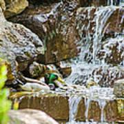 Ducks In The Falls Art Print