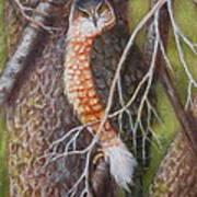 Red Shoulder Hawk Art Print