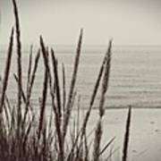 Dune Grass In Early Spring Art Print