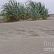 Dune Grass On Beach Dune Landscape Art Prints Art Print