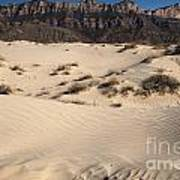 Dunes At The Guadalupes Art Print