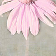 Dusky Pink Coneflower Art Print