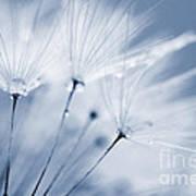 Dusty Blue Dandelion Clock And Water Droplets Art Print